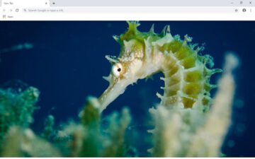 Seahorse Wallpapers and New Tab